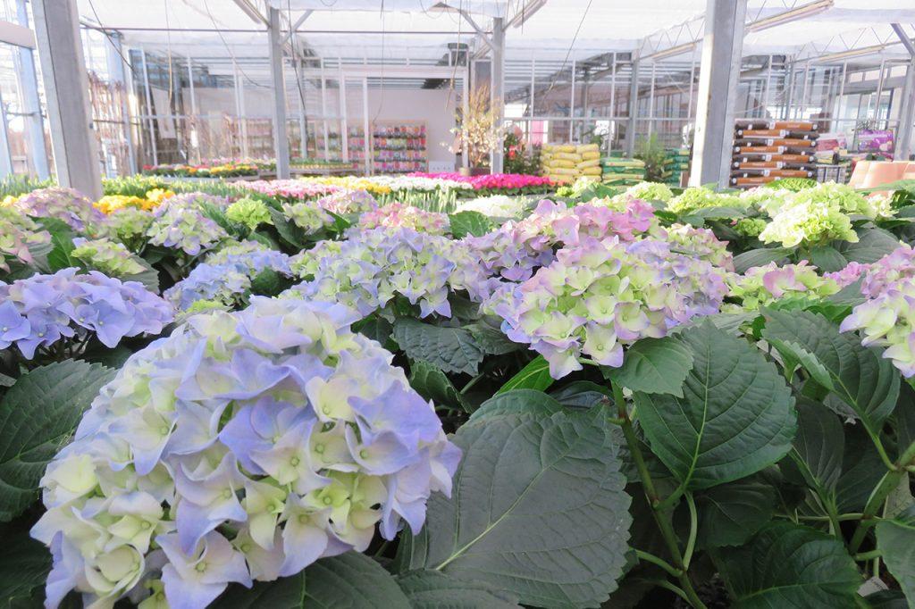 Blomster i Vordingborg Plantehandel